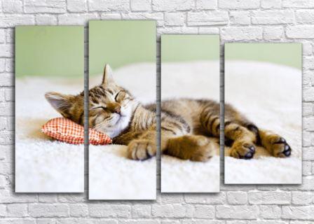 Каталог модульных картин с кошками